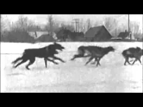 1947 American Dog Derby Newsreel